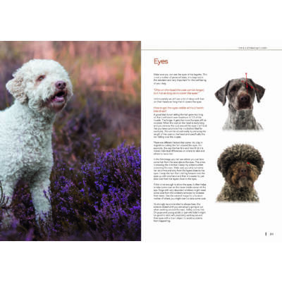 Book Lagotto romagnolo grooming -The art of keeping it rustic-