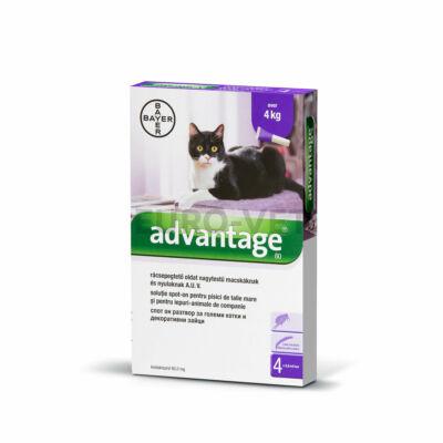 Advantage rácsepegtetõ oldat nagytestû macskáknak és nyulaknak A.U.V. 4x0,8 ml ampulla